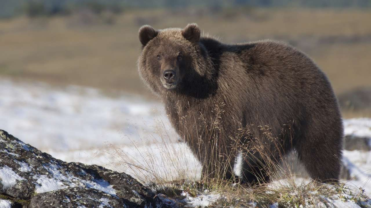 Russian Arctic Holidays (With images) Brown bear, Arctic