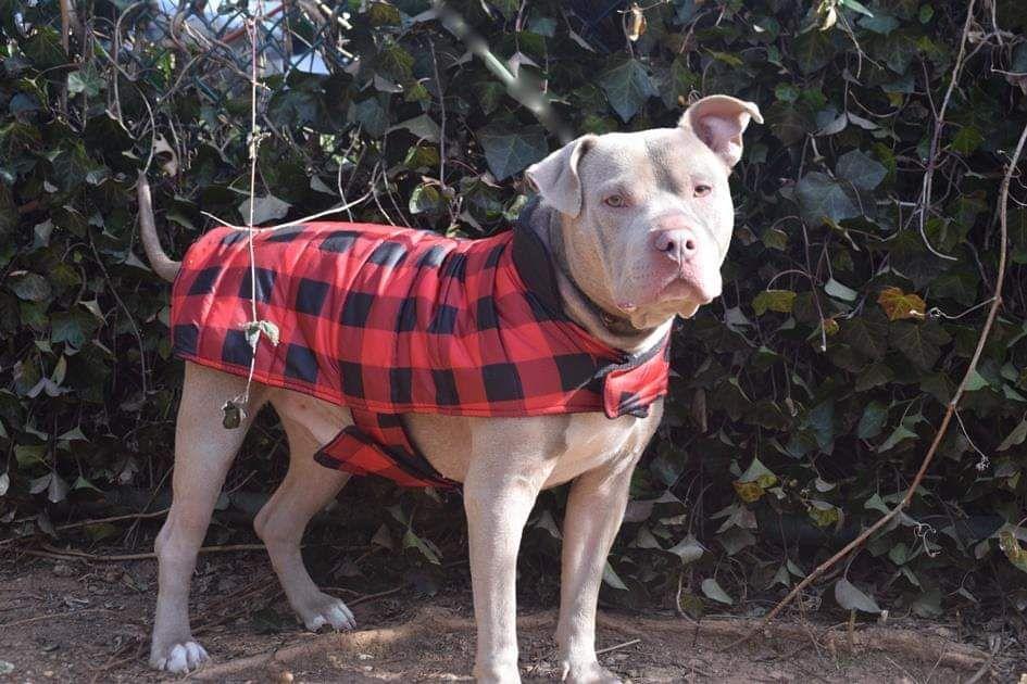 Ann gaviota330 twitter animals pet care nyc acc