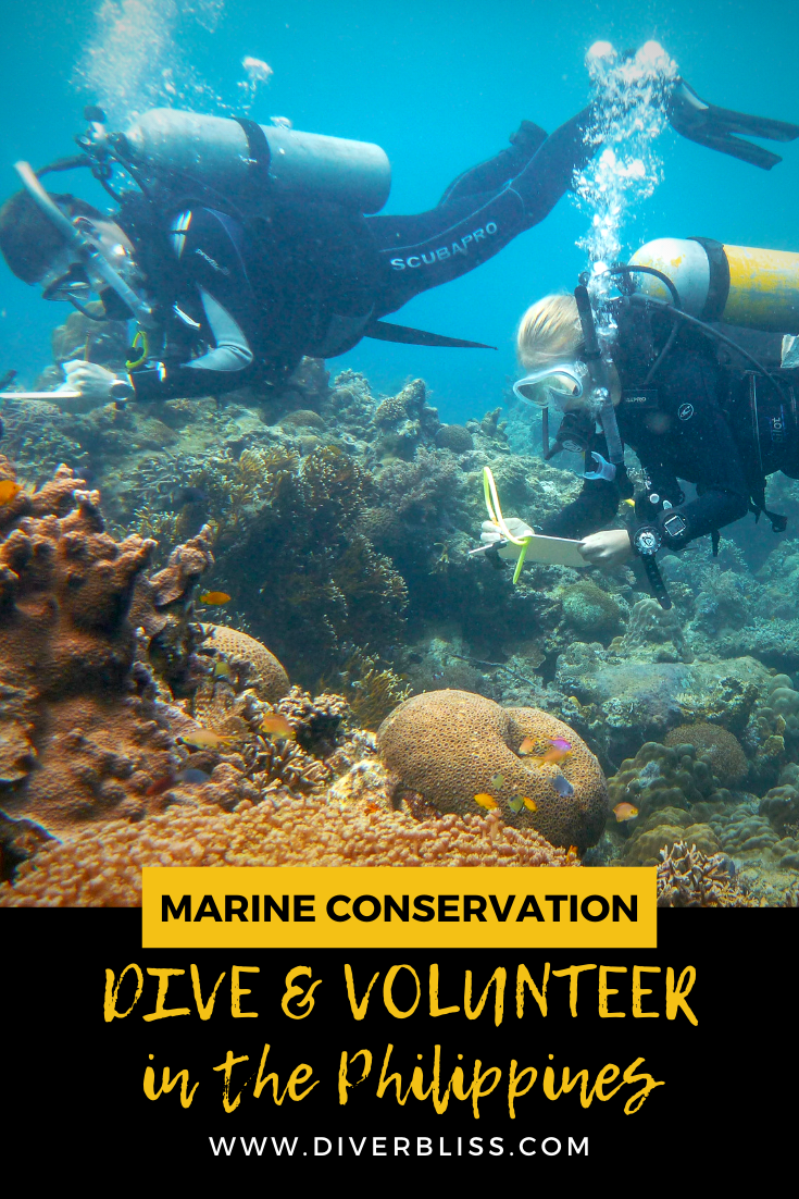 Marine Conservation Opportunities Dive And Volunteer In The Philippines In 2020 Philippines Travel Scuba Diving Photography Marine Conservation