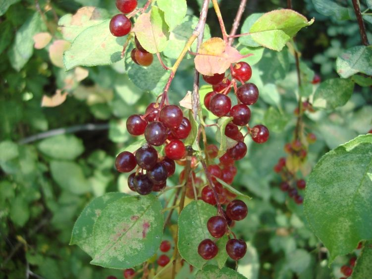 Pin On Wild Edible Plants