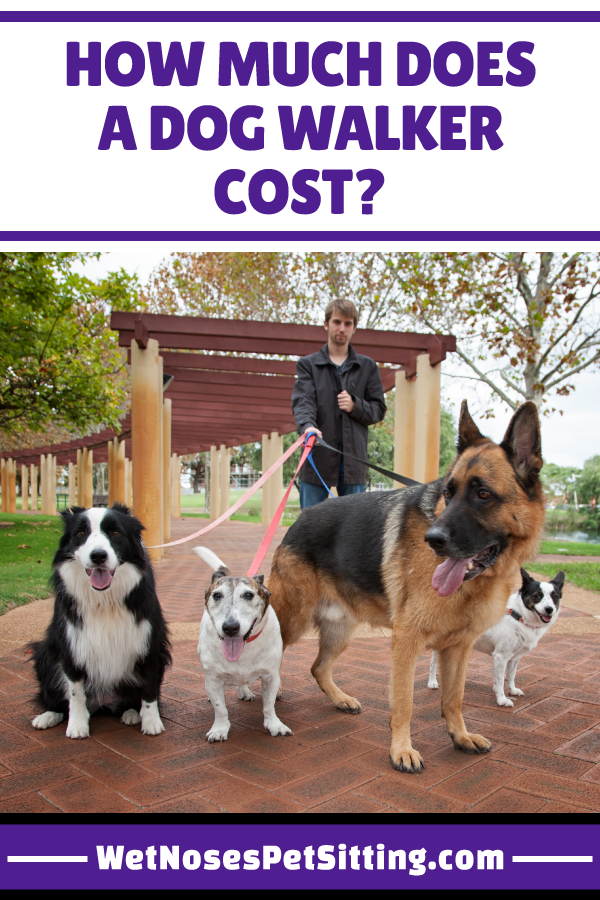 How Much Does A Dog Walker Cost Wet Noses Pet Sitting Dog