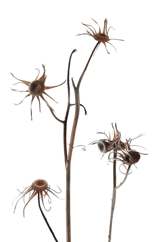 winter wildflowers (mary jo hoffman) Wildflower drawing