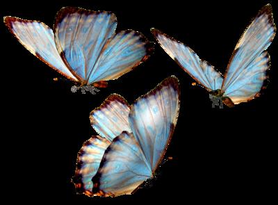 Beautiful Butterfly Transparent Flowers Art Butterfly Art