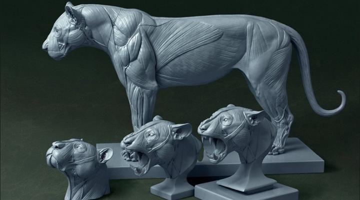 "3D Print .com en Twitter: ""Jun Huang's 3D Printed Big Cat Anatomy Models a Smashing Kickstarter Success http://t.co/aogqIIVO8L http://t.co/u29zNEk2uE"""