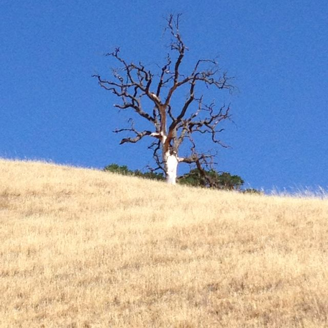 8 mile grueling hike in Livermore's Lake Del Valle.