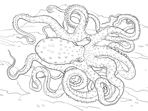 Atlantic White Spotted Octopus Coloring page
