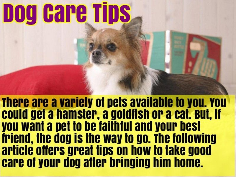 Excellent Article About Dogs That Is Simple To Follow Along Dogs Pet Dogs Pets