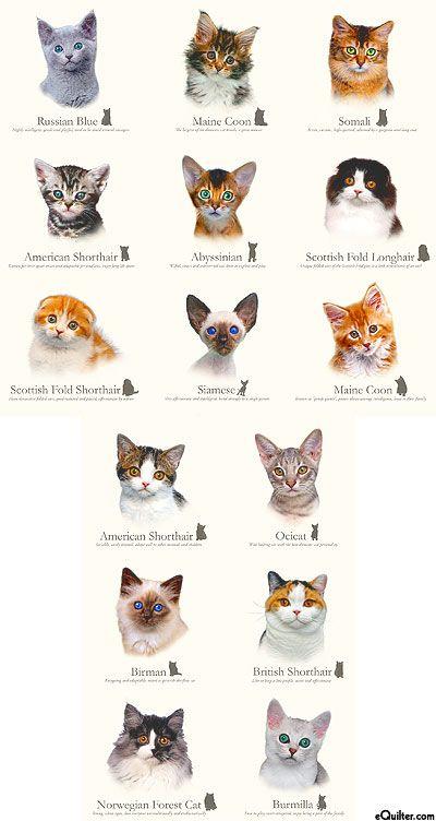 Cat Breeds Cluster Of Kittens Cat Breeds Kitten Breeds Cat