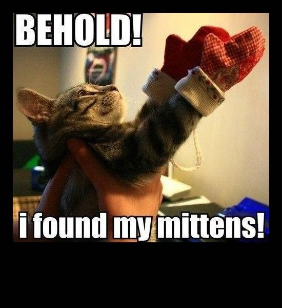 Kitten Found Mitten Behold Funny Cat Memes Funny Animals Cat Memes