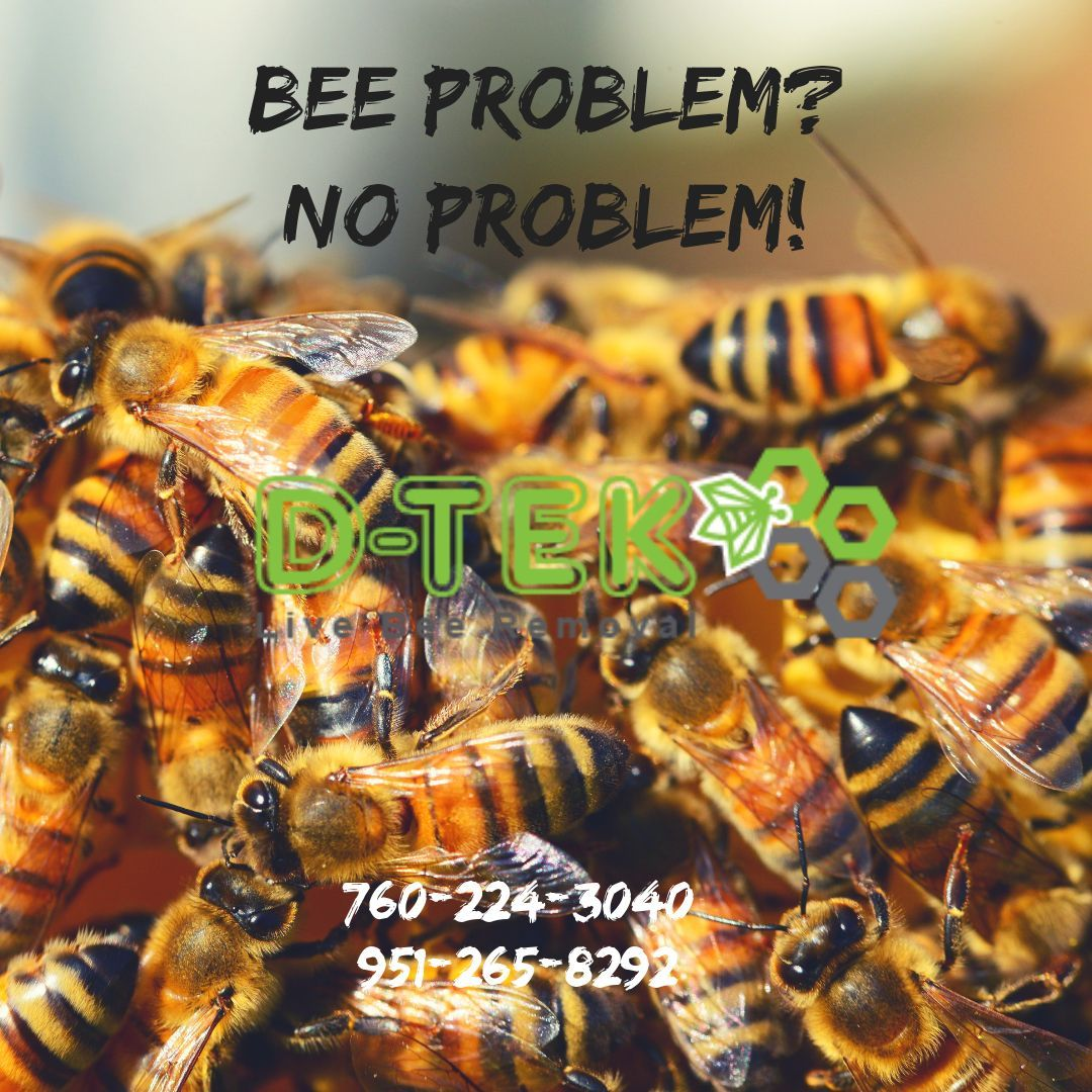 D Tek Live Bee Removal Only Uses The Most Humane Live Bee Removal Methods Without The Use Of Any Pesticides After Every Bee Removal Bee Problem Bee