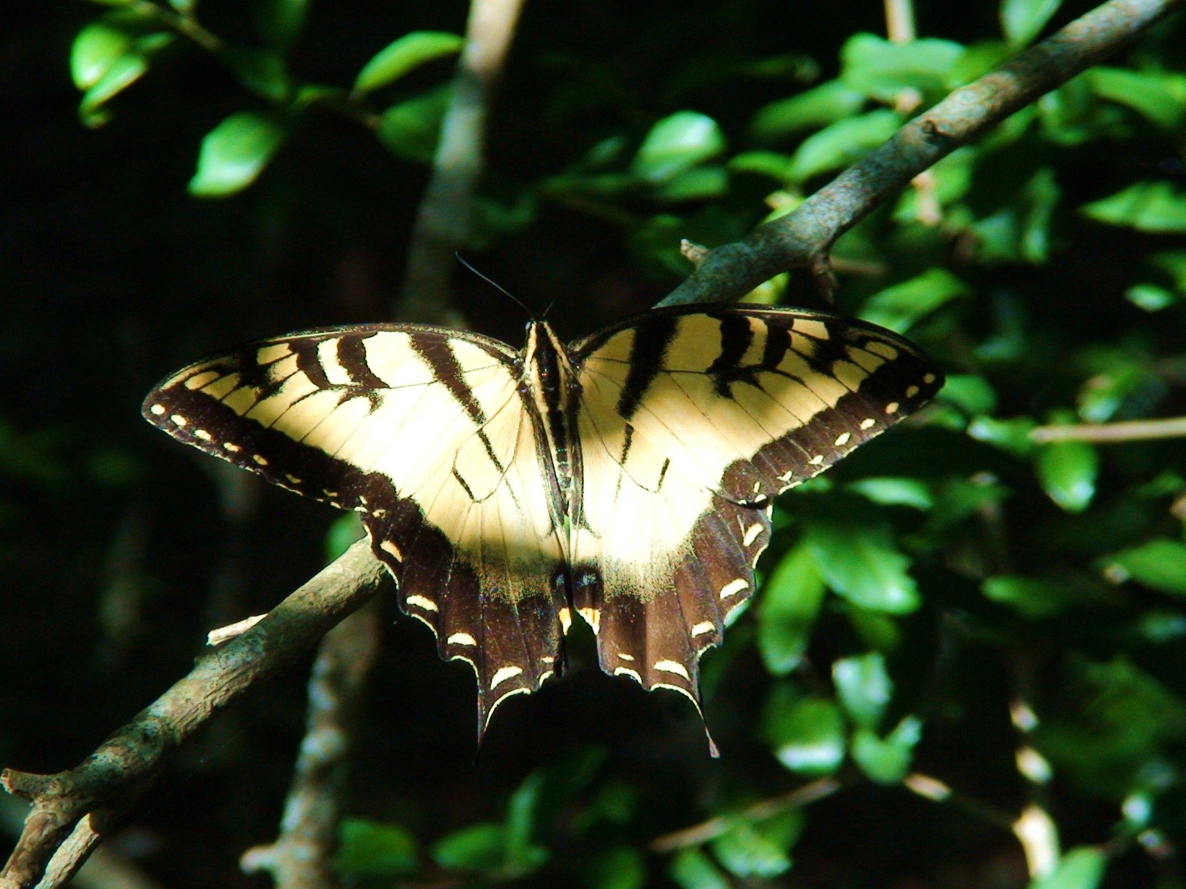 Metamorphosis, A Caterpillar's Life Butterfly pose