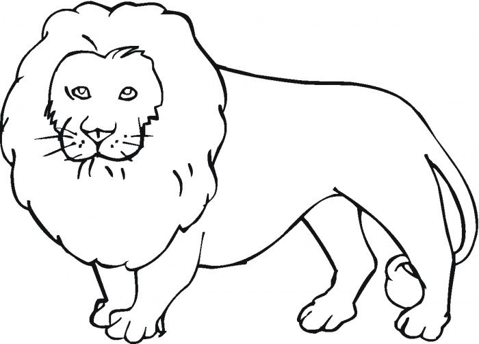 Animals Coloring Pages On Lion Coloring Pages Animal Coloring Books Animal Sketches