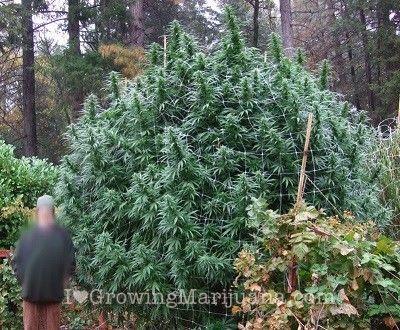 Seeds Or Clones? How To Start My Indoor Marijuana Grow Cannabis