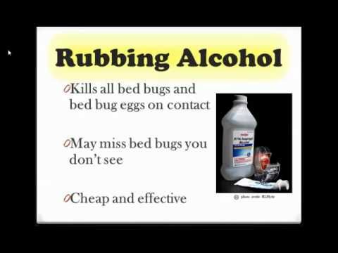 Http Killallbedbugs Com How To Get Rid Of Bed Bugs For More