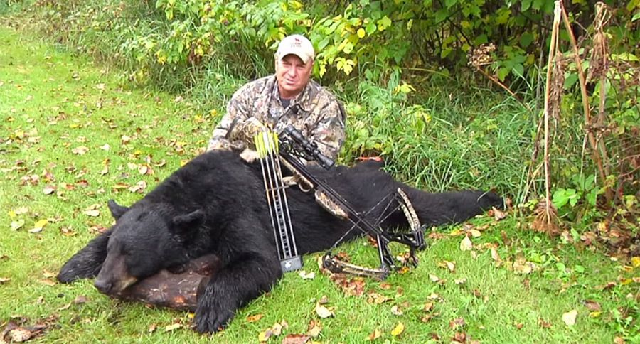 Massive Canadian Black Bear Taken with a Crossbow [VIDEO] | A