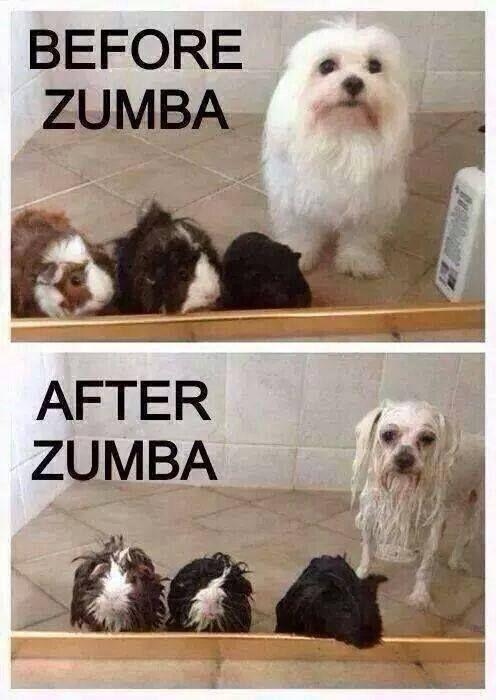 Zumba Funny Google Search Lustige Fitness Zumba Lustig Zumba