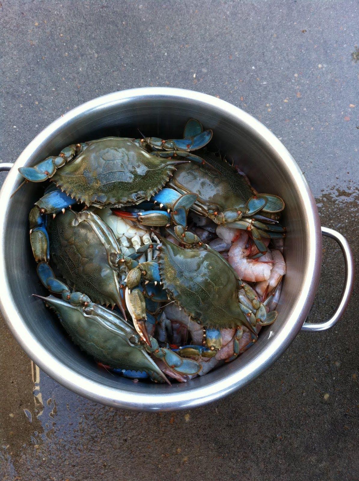 Blue Crab Yum