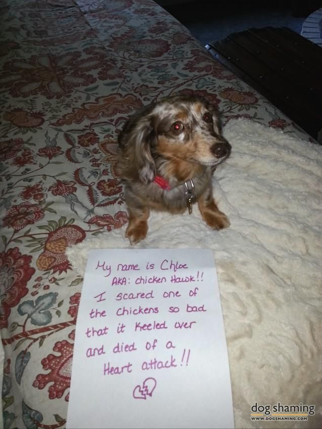 chloe-shaming