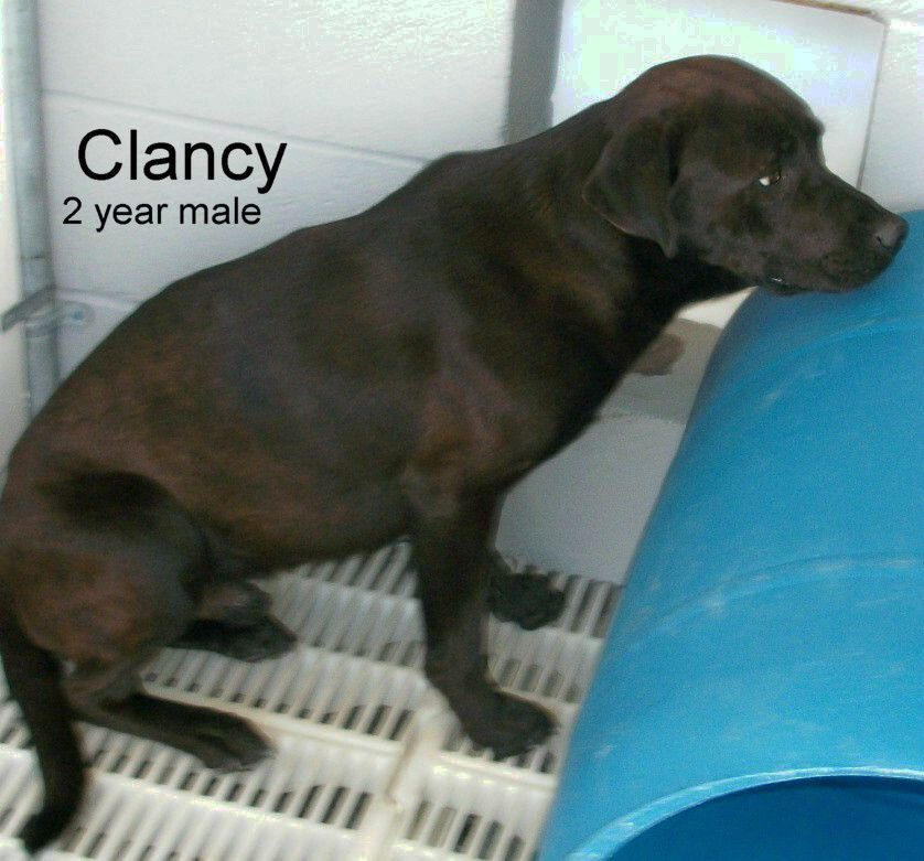 Nc clancy has 5 days left to live euthanasia date