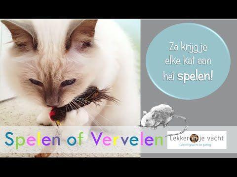 Spelen of Vervelen - Krijg elke kat aan het spelen!