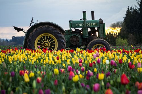 This Old Tractor. I love old tractors and it love this picture!