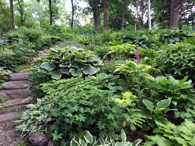 From Spring To Summer In MN   FineGardening. Gardening MagazinesWoodland  GardenGreen ...