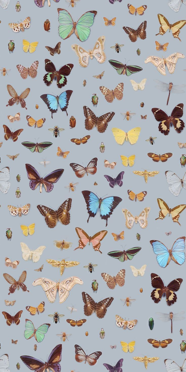 Pin By Kbree On Art Butterfly Wallpaper Iphone Background