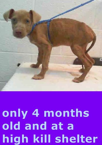 Pin By Holly Willow S Pet Barn On Adopt A Dog Cat With Images Dog Adoption Animals Animal Shelter