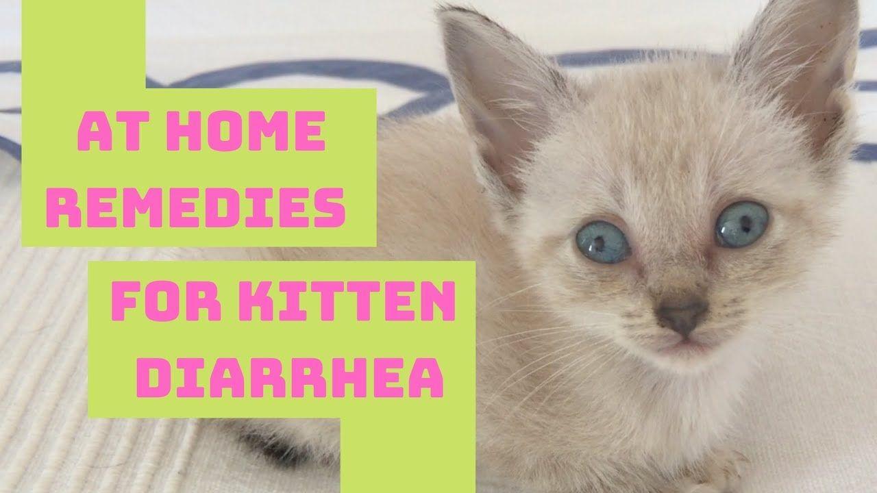 Kitten Cat Diarrhea Home Remedy Safe Easy In 2020 Cat Diarrhea Kitten Cats And Kittens