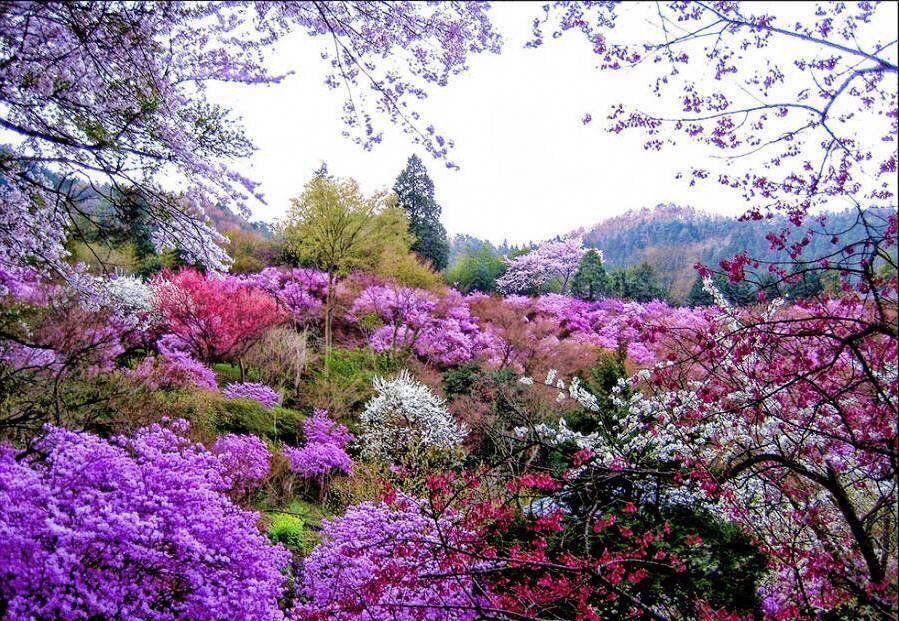 Pin de Malena Edward en Flowers Pinterest Jardines y Hermosa - Jardines Hermosos