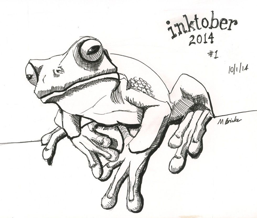 Line Drawing Frog : Frogs drawings imgkid the image kid has it