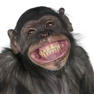 Image result for toothy smile