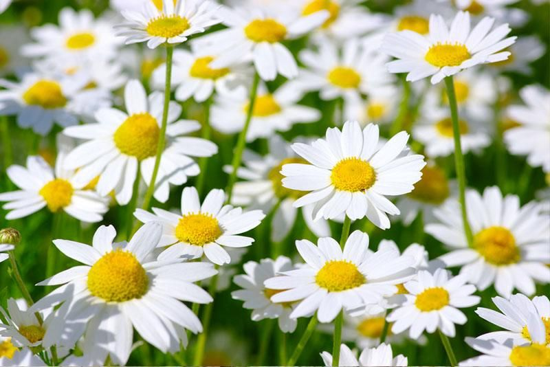 Birth Month Flowers and Their Meanings Birth flowers