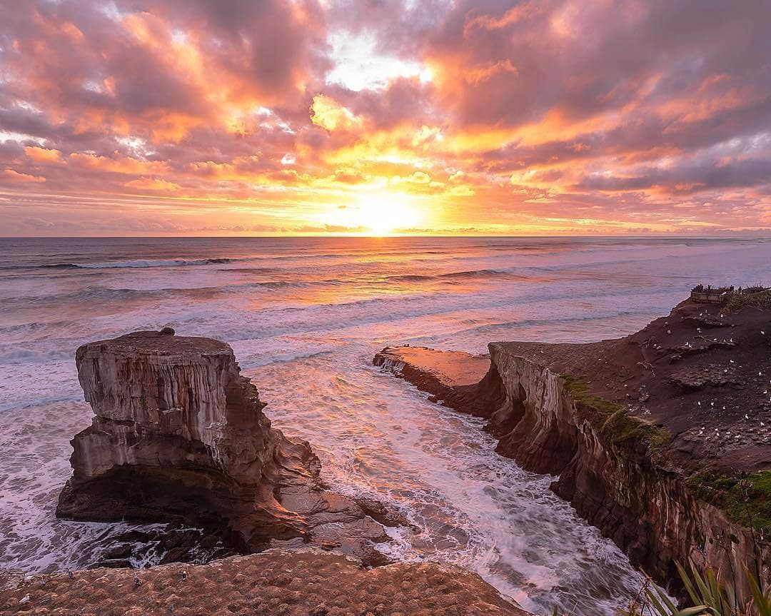 Auckland New Zealand On Instagram What A Stunner Of A Sunset At Muriwai Beach Muriwai S Fantastic Clifftop Platforms Overlook The Gannet Colonies That Come I 2020