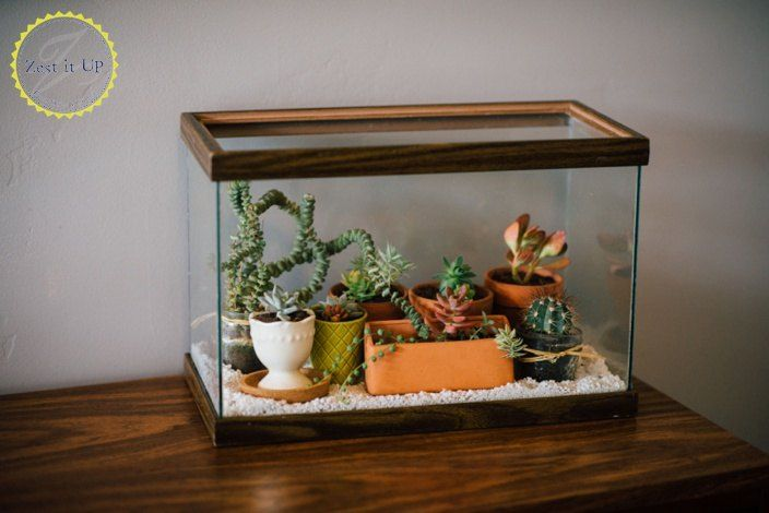 Easy Diy Terrarium From An Old Fish Tank Make It Yourself