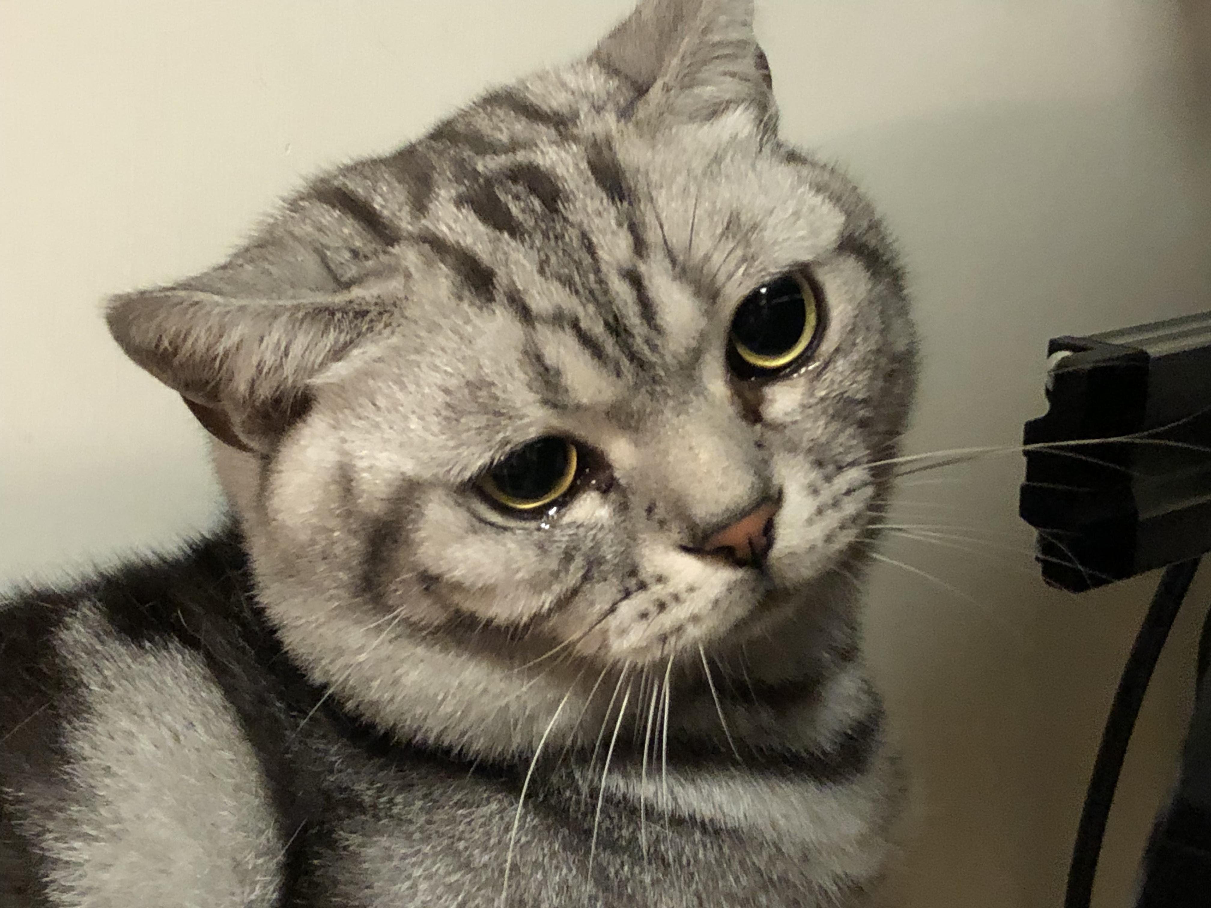 #Cats #Cat #Kittens #Kitten #Kitty #Pets #Pet #Meow