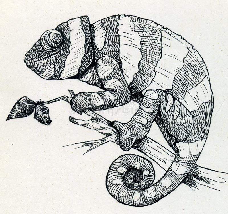 Hand Drawn Smiling Chameleon Hand Drawn Ink Sketch Of A Smiling Chameleon Cling Spon Smiling Chamele Animal Line Drawings Chameleon Art Animal Drawings