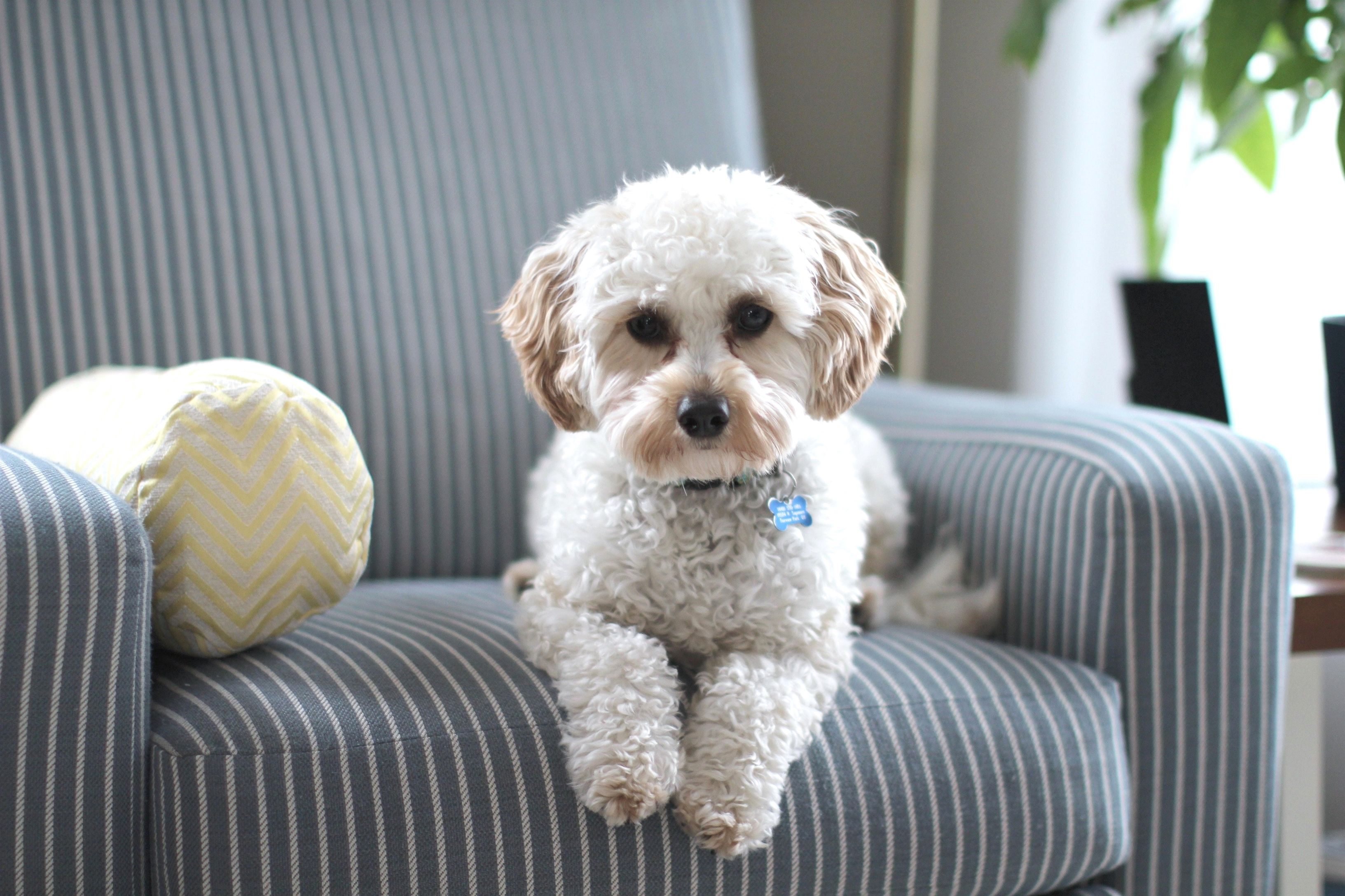 Ideas And Tips For Home Improvement Projects Dogs Puppy Training Training Your Puppy