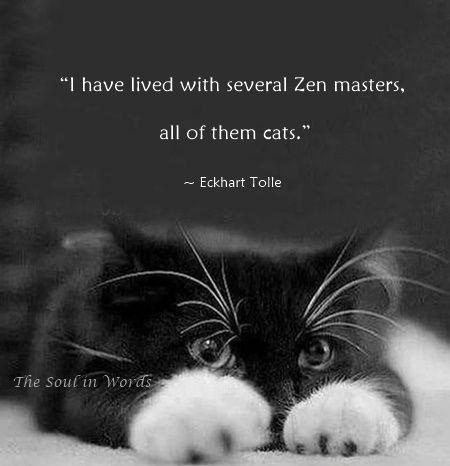 Eckhart Tolle Thesoulinwords Zen Cats Quote Quotes Pinterest