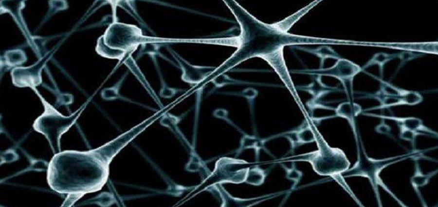 #La 'limpieza' de neuronas muertas falla cuando hay epilepsia - CM&: CM& La 'limpieza' de neuronas muertas falla cuando hay epilepsia CM&…