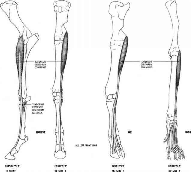 3d anatomy software cat - Cerca con Google | VET | Pinterest