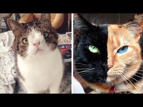 Katzen, deren Existenz du nicht glauben wirst! - YouTube