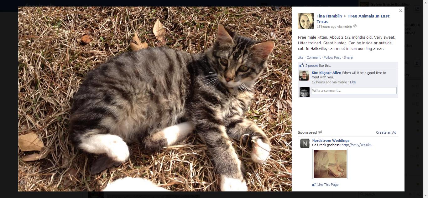 Free Animals In East Texas Kitten Adoption Animals Kittens