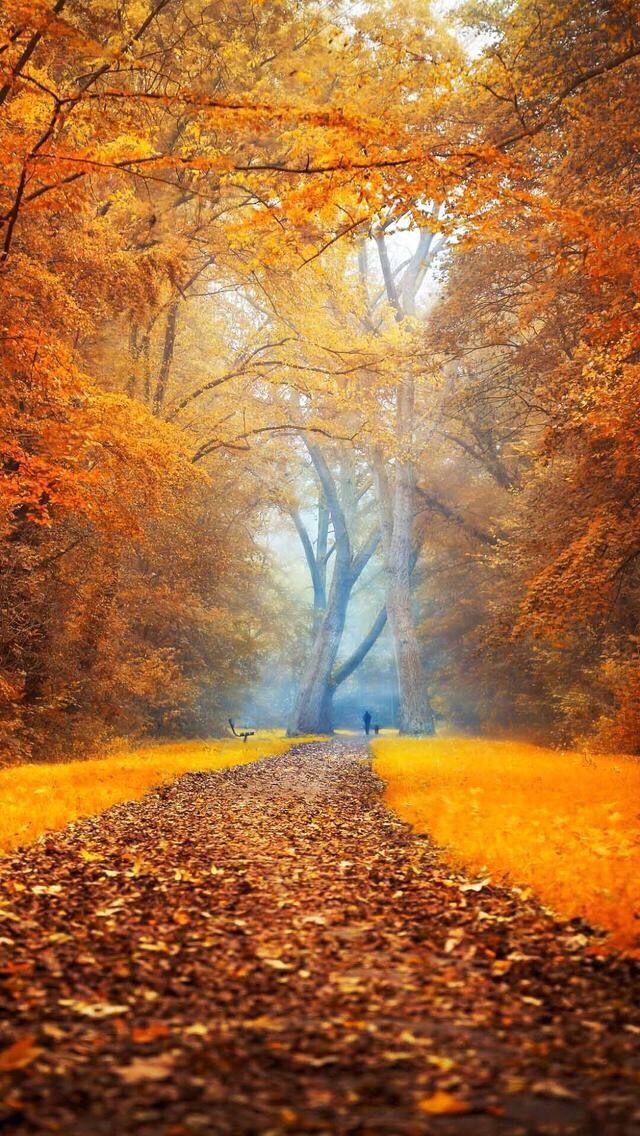 Wallpaper Iphone Autumn Autumn Autumn Scenery