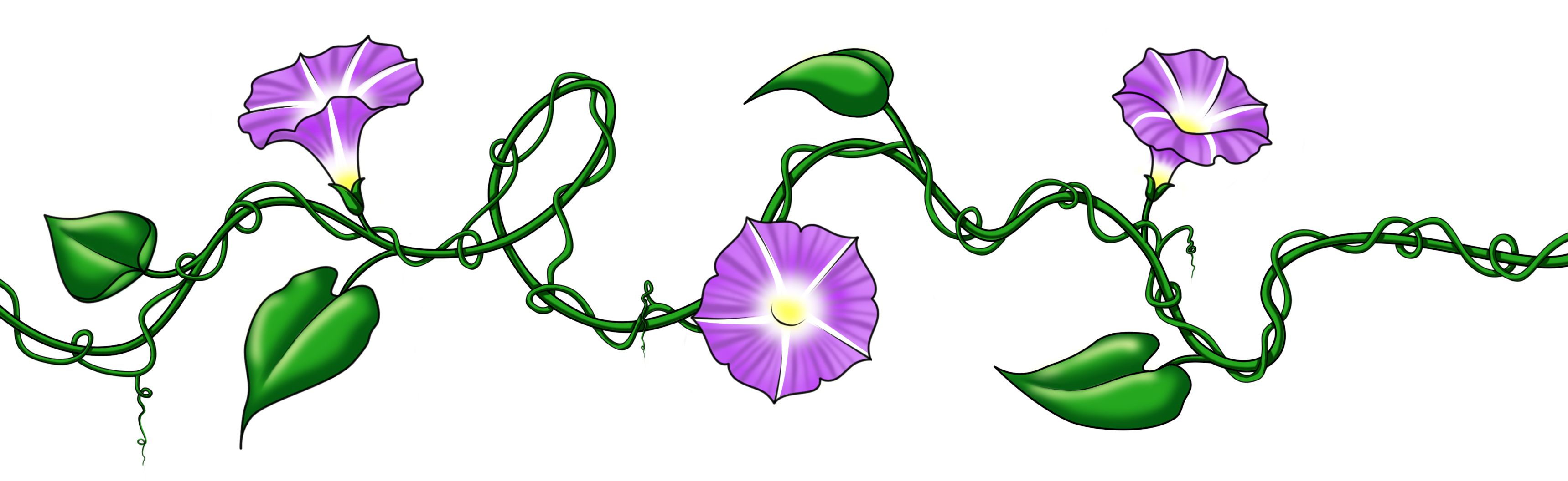 Morning Drawing Flower Glory Vines