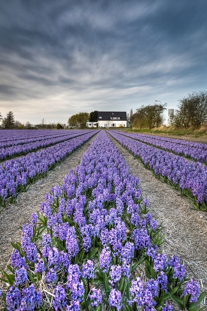 House With A View And A Smell Lavender Fields Beautiful Flowers Beautiful Gardens