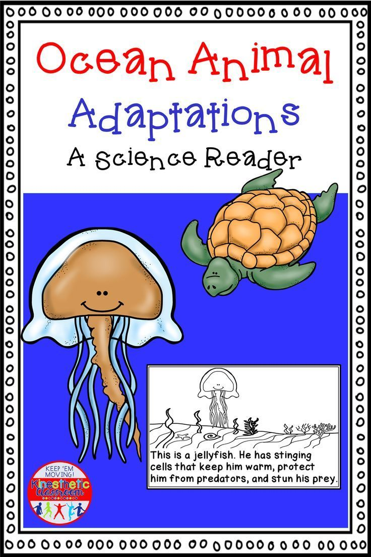 Ocean Animal Variations A Science Reader Science readers