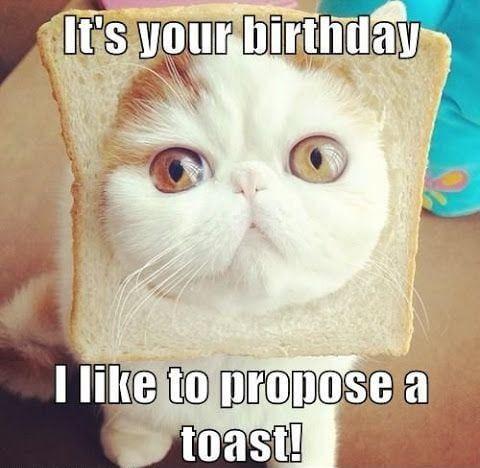 Cat Birthday Meme Toast Funny Birthday Pictures Funny Happy Birthday Pictures Funny Happy Birthday Meme