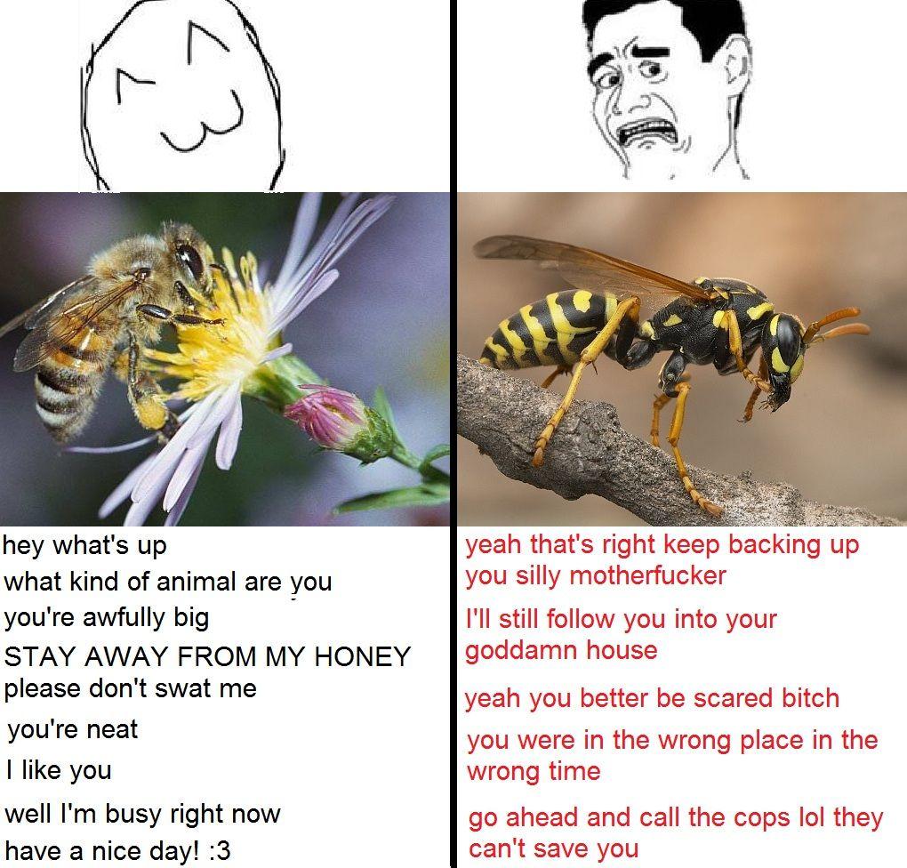 Honey Bee Vs Yellow Jacket Humor Bee Bees Wasps Funny Images
