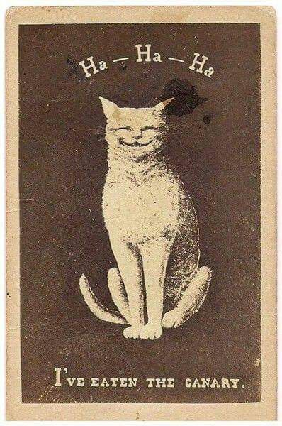 Pin By Sydney Pigott On Wall In 2020 With Images Vintage Cat